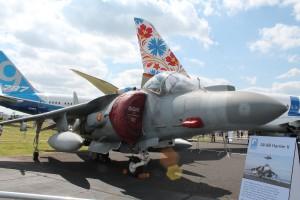 Spanish-Harrier